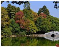菱湖风景区的桥--曲水桥
