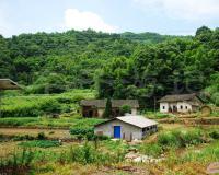 华冲周家老屋与三百年古樟树
